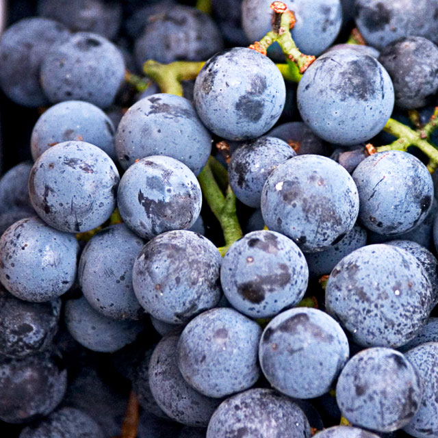 ... grapes is the concord grape it is regularly used in grape flavored