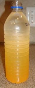 GoodBelly TOGO Mango in Water Bottle - Not Shaken Up