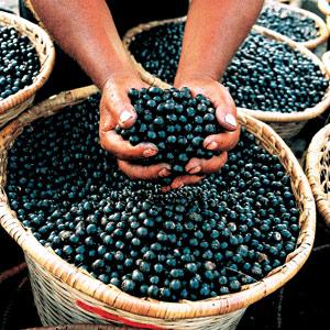 Acai berries in a basket