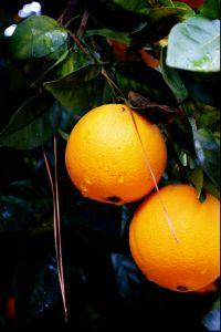 Uses of Oranges