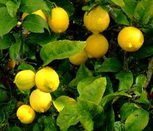 Lemons and Insomnia