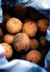 The Santol Fruit