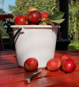 Apple Picking Farms