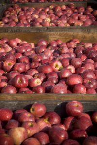 Michigan Fruit Farms