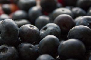 Blueberry Farms