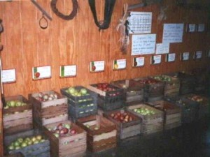 Fruit in Crates at Store