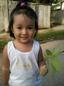 Fruit of the Philippines - Aratilis