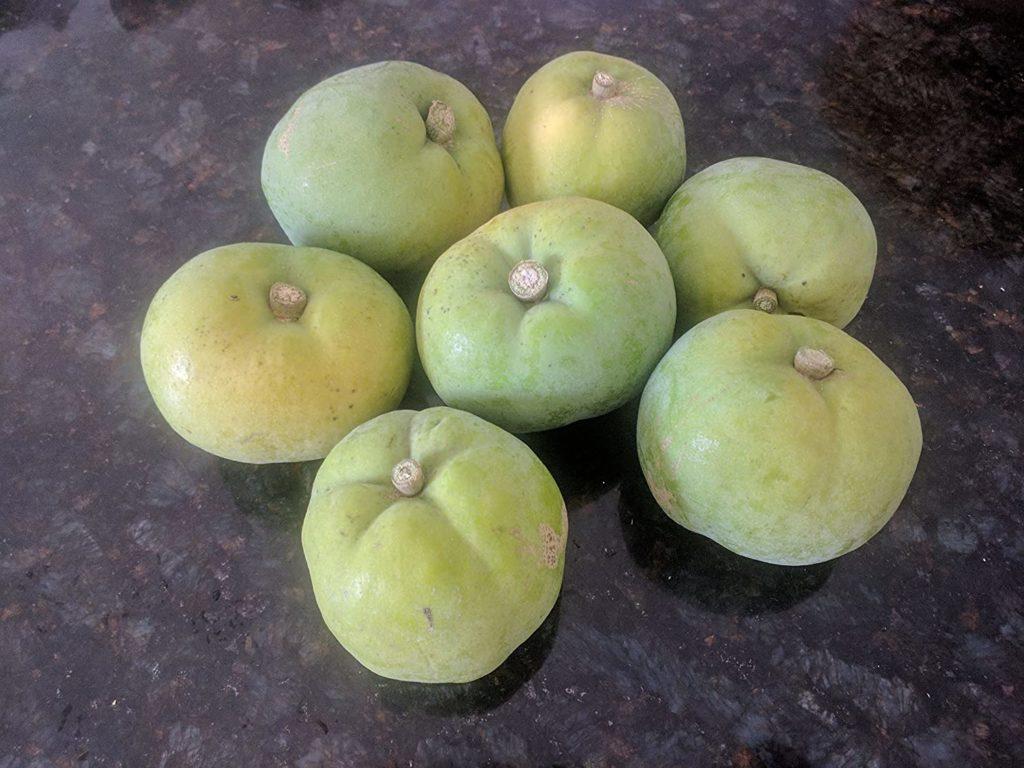 Fresh Rare Exotic Fruit WHITE SAPOTE Casimiroa Edulis