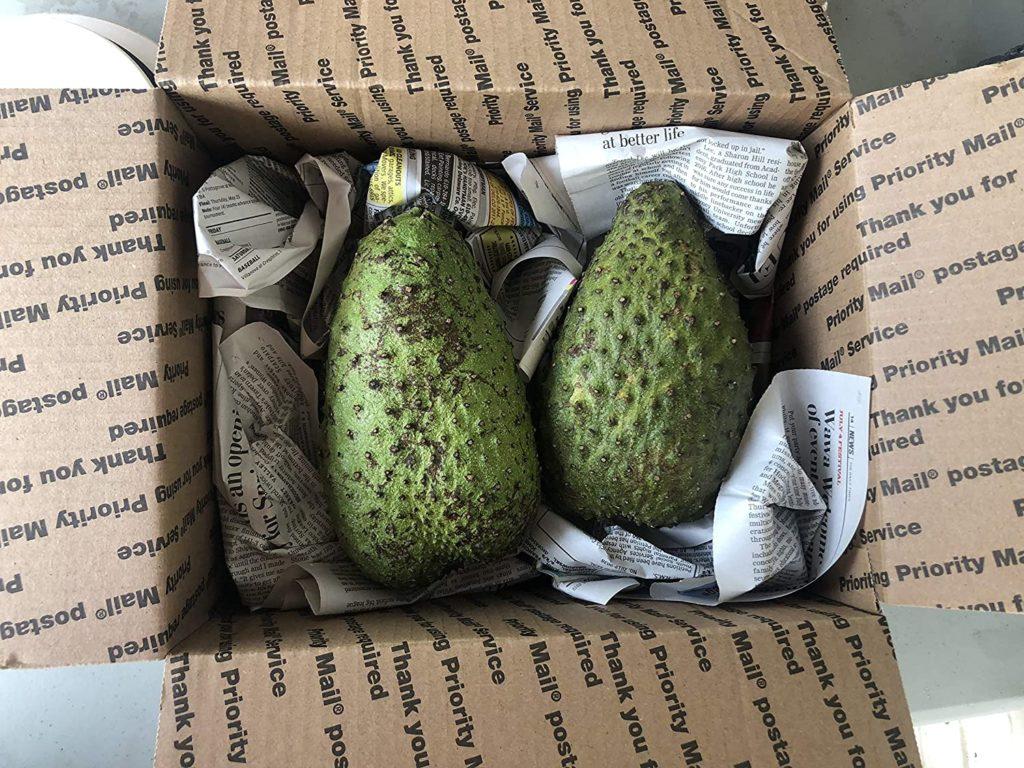 Fresh Guanabana Soursop Graviola Fruit