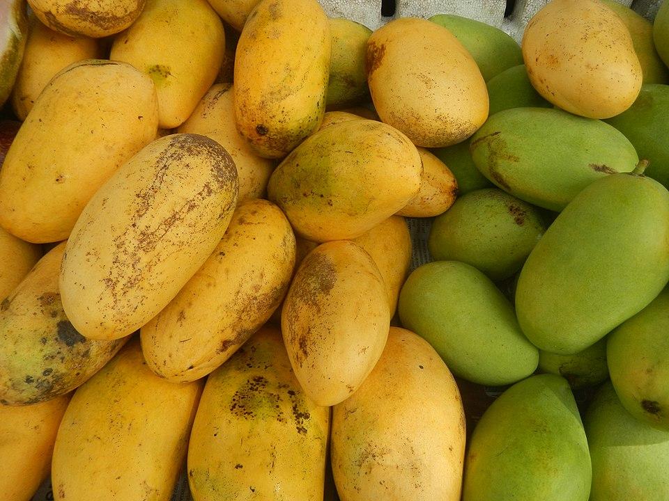 The Famous Philippine Carabao Mango