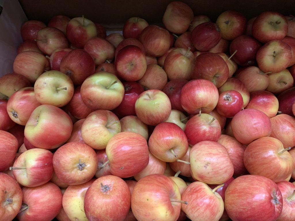 Organic Crimson Apples IMG_9833