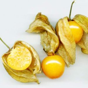 Heirloom Ground Cherry Husk Tomto Golden Berry Seeds Golden Berry Outsidepride Cape Gooseberry Physalis Peruviana Plant