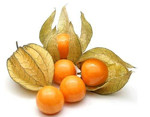 Kejora Fresh Golden Berries Cape Gooseberries