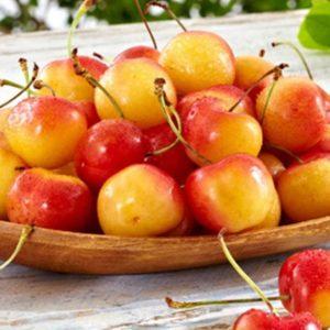 Rainier Sweet cherry yellow white fruit flesh very sweet fruit tree