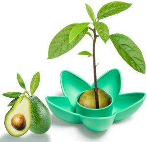 Avocado Tree Growing Kit Avocado Seed Planting Bowl Cool Gifts for Women Kids Mom