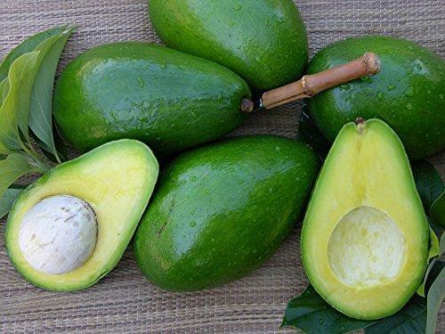 Florida Avocado – Sunset Groves – Farm to Table – Picked Fresh