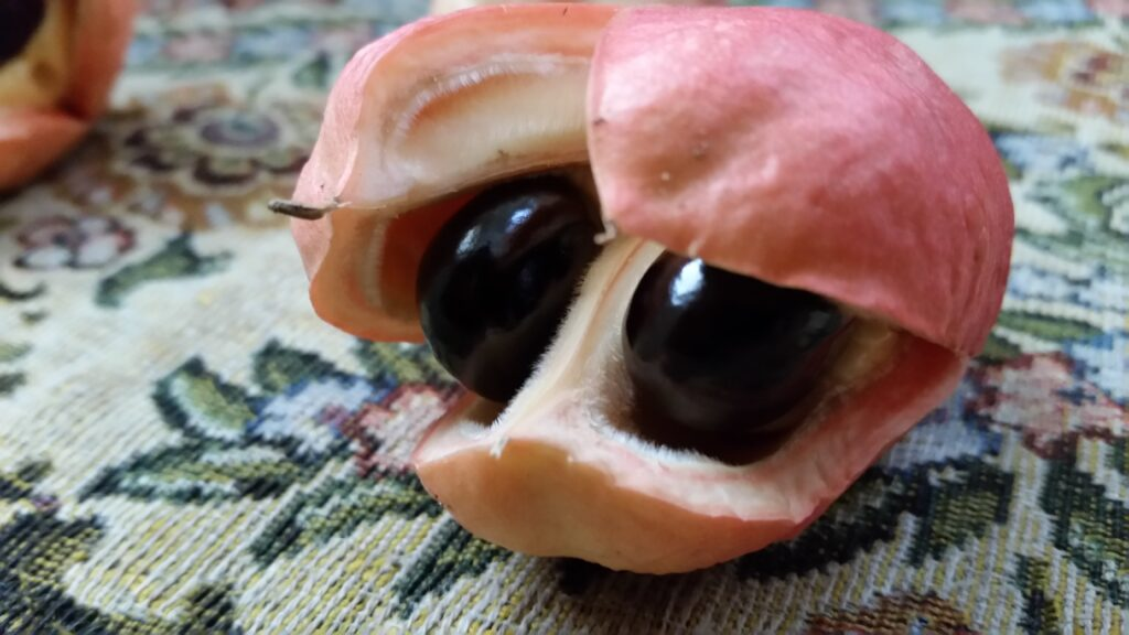 Ackee Fruit opened on the table.