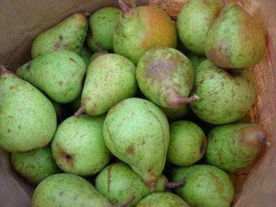 Pick Pears