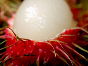 Rambutan by Alysyafiq